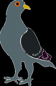 pigeon algo update